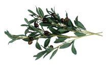 """Декоративная искусcтвенная ветка оливы Accentra серии """"Olive"""" купить"""
